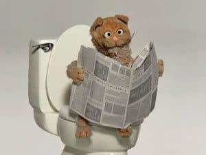 cat-toilet-wiki