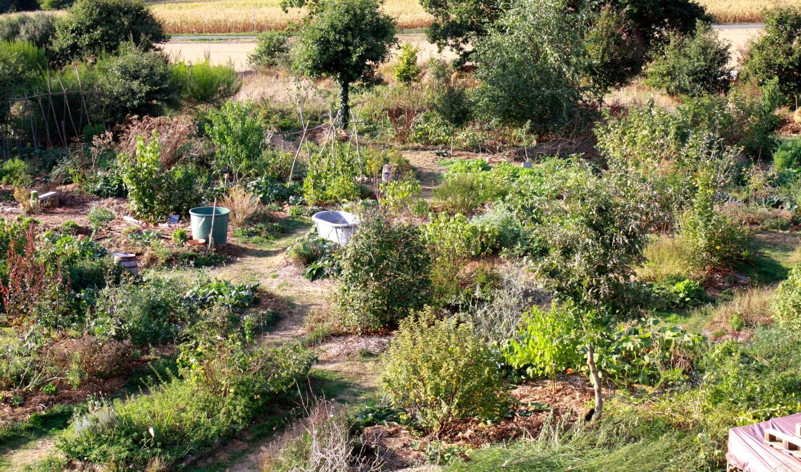 quelques conseils pour optimiser votre travail au jardin