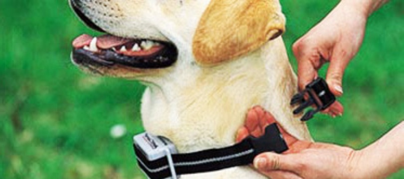 Collier-anti-aboiement-chien